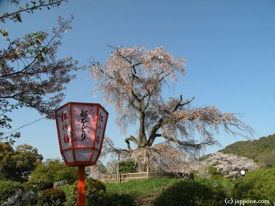 2009-kyoto-sakura-3945