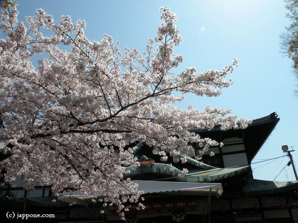 2009-kyoto-sakura-3950