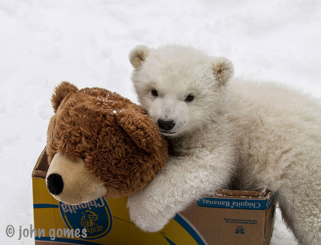 cute Polar Bear photos