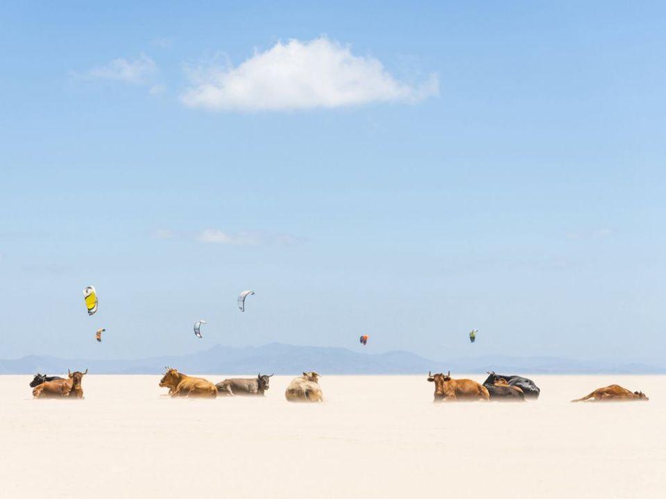 cows-tarifa-beach_73863_990x742