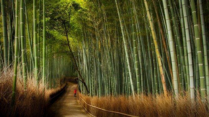 sagano-bamboo-forest-3-resize22-670x376