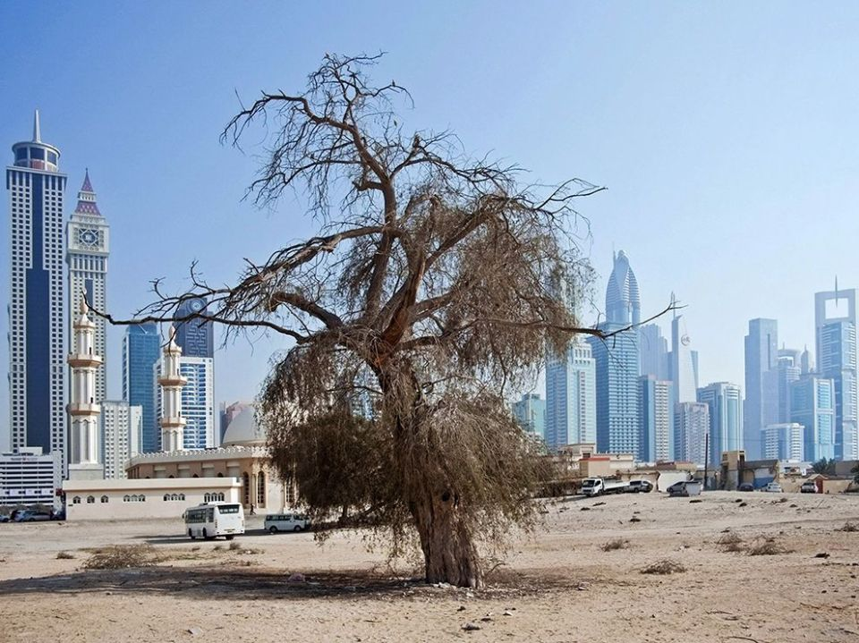 tree-nature-urban-dubai_81127_990x742
