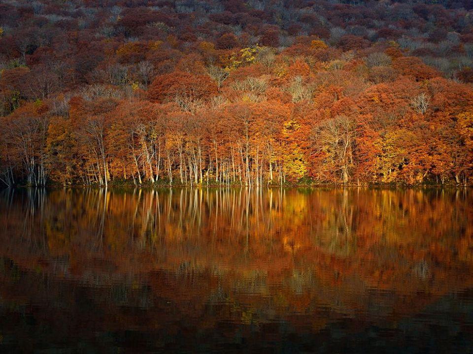 autumn-leaves-aomori-japan_84456_990x742